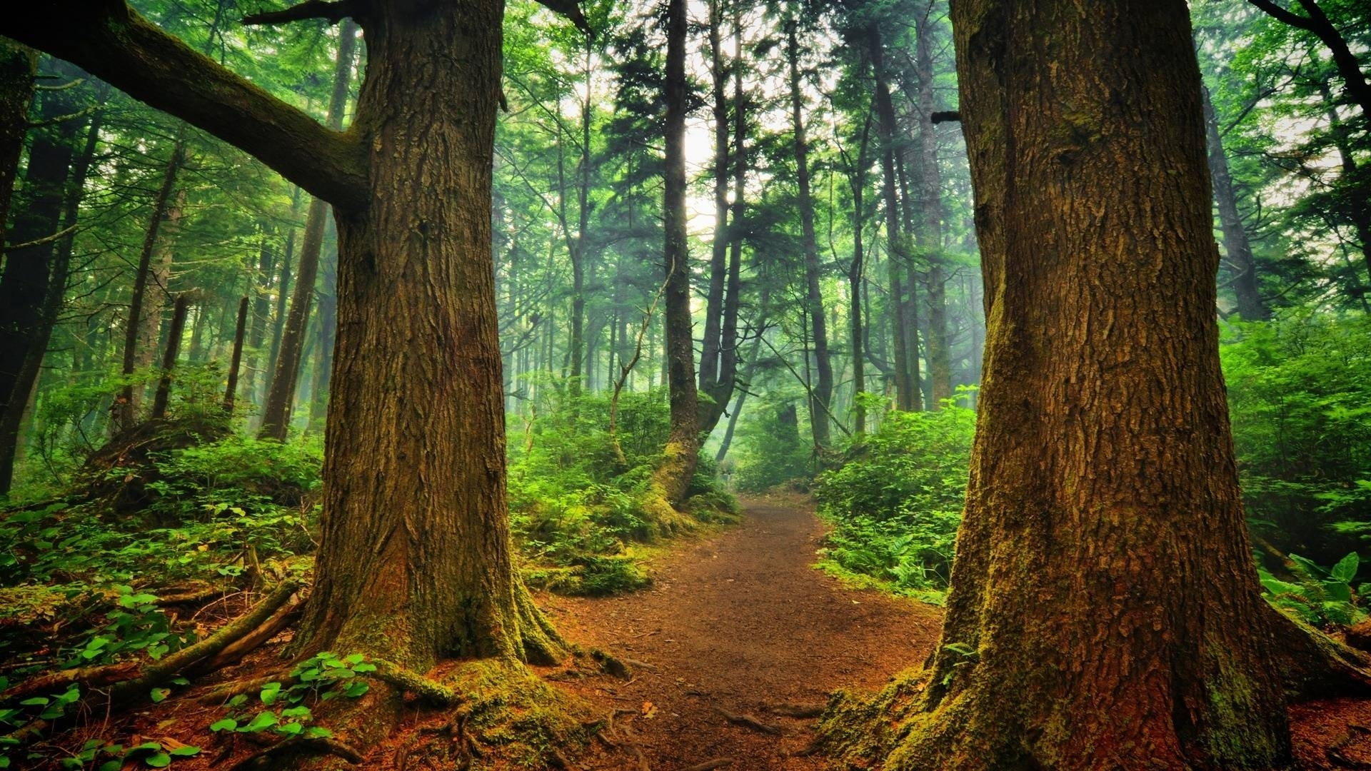 forest wallpaper hd pics of iphone ~ gipsypixel