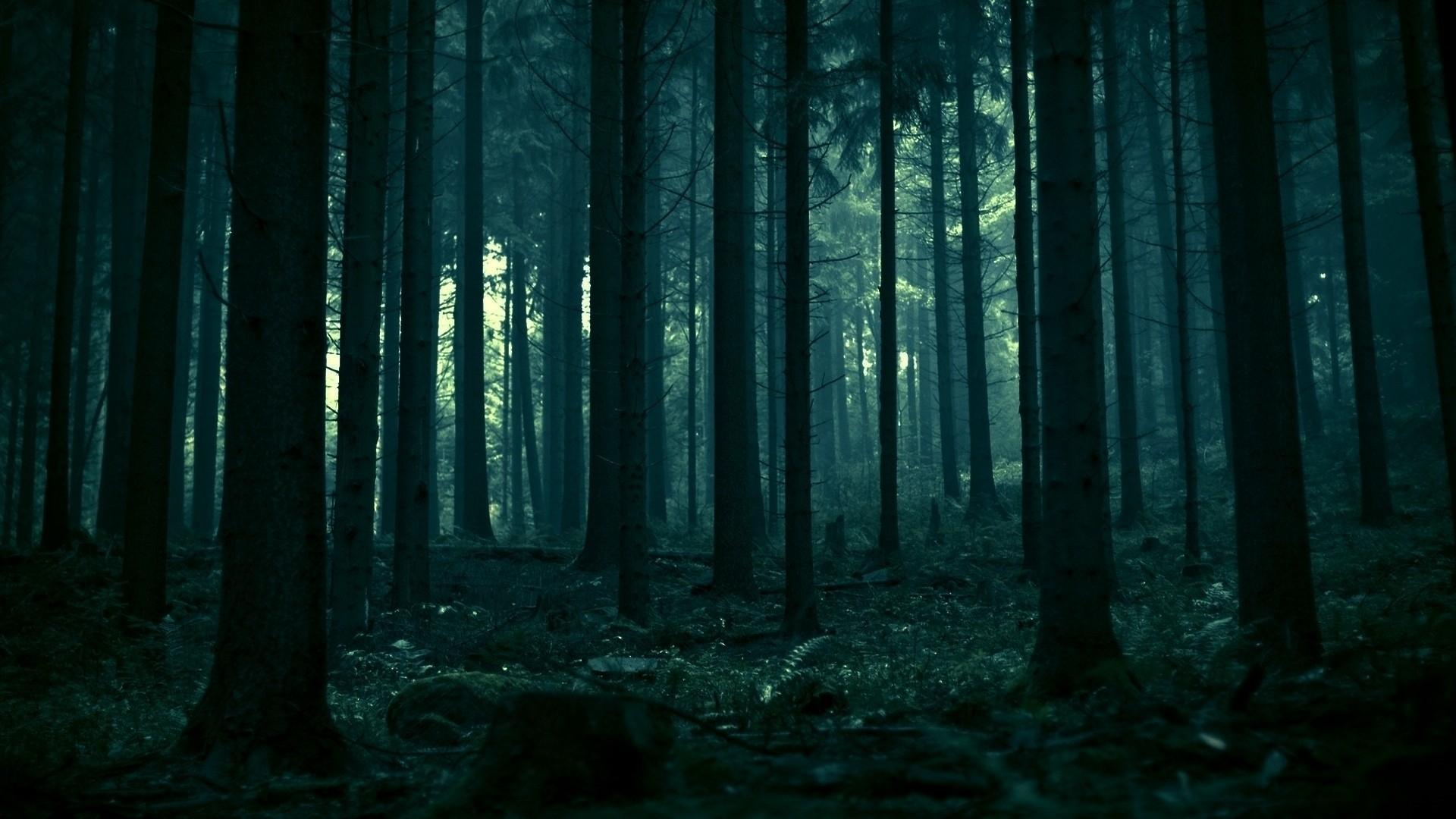 forest wallpaper tumblr 3 | gravity falls cover's me | pinterest