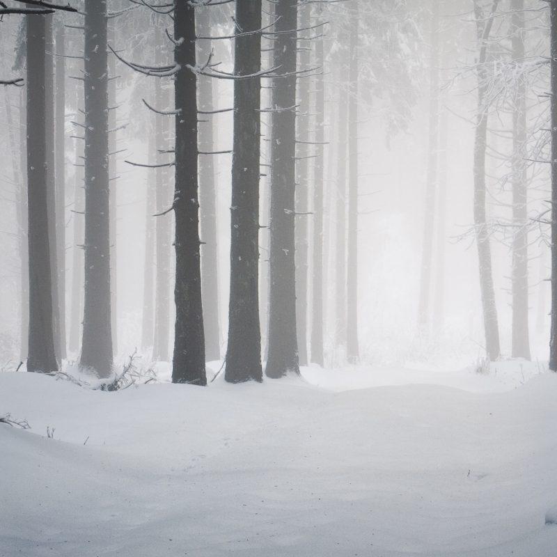 10 Latest Winter Forest Hd Wallpaper FULL HD 1920×1080 For PC Background 2020 free download forest winter e29da4 4k hd desktop wallpaper for 4k ultra hd tv 800x800