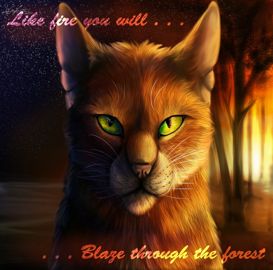 forever warriors cats images firestar! hd wallpaper and background