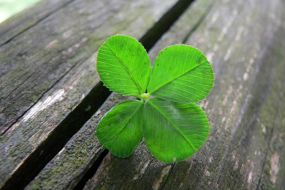 four leaf clover wallpapers - wallpaper cave | all wallpapers