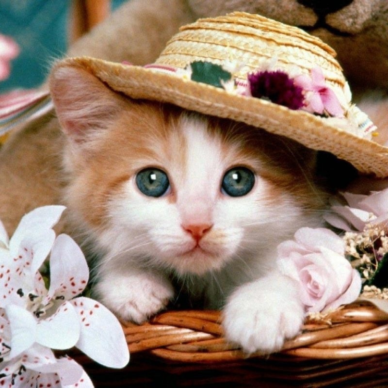 10 Most Popular Cute Animal Wallpapers Free FULL HD 1080p For PC Background 2020 free download free 3d cute animals wallpapers hd download 800x800