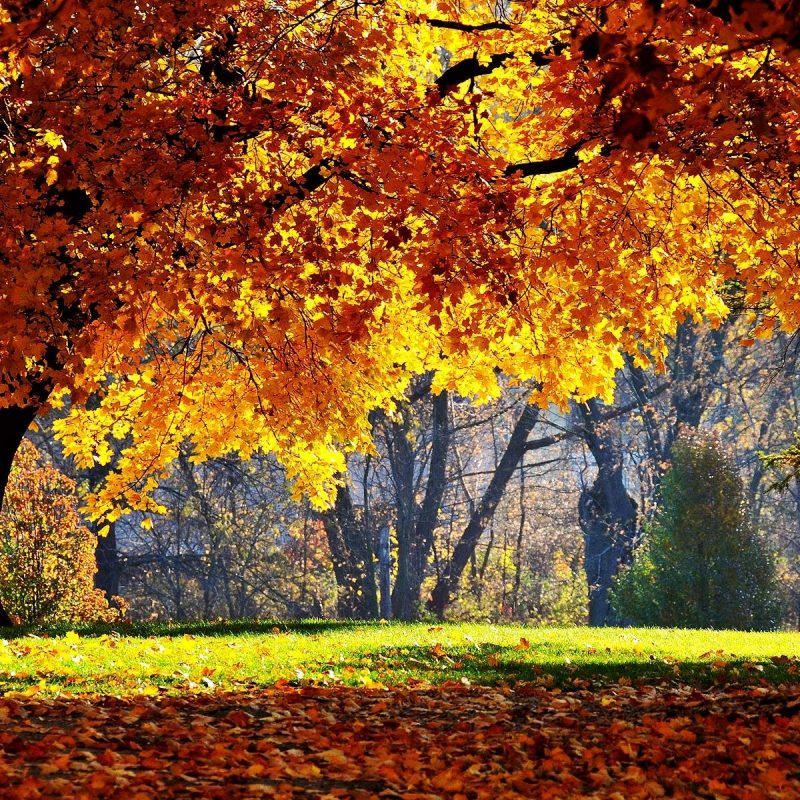 10 Best Fall Wallpapers For Desktop FULL HD 1080p For PC Background 2018 free download free