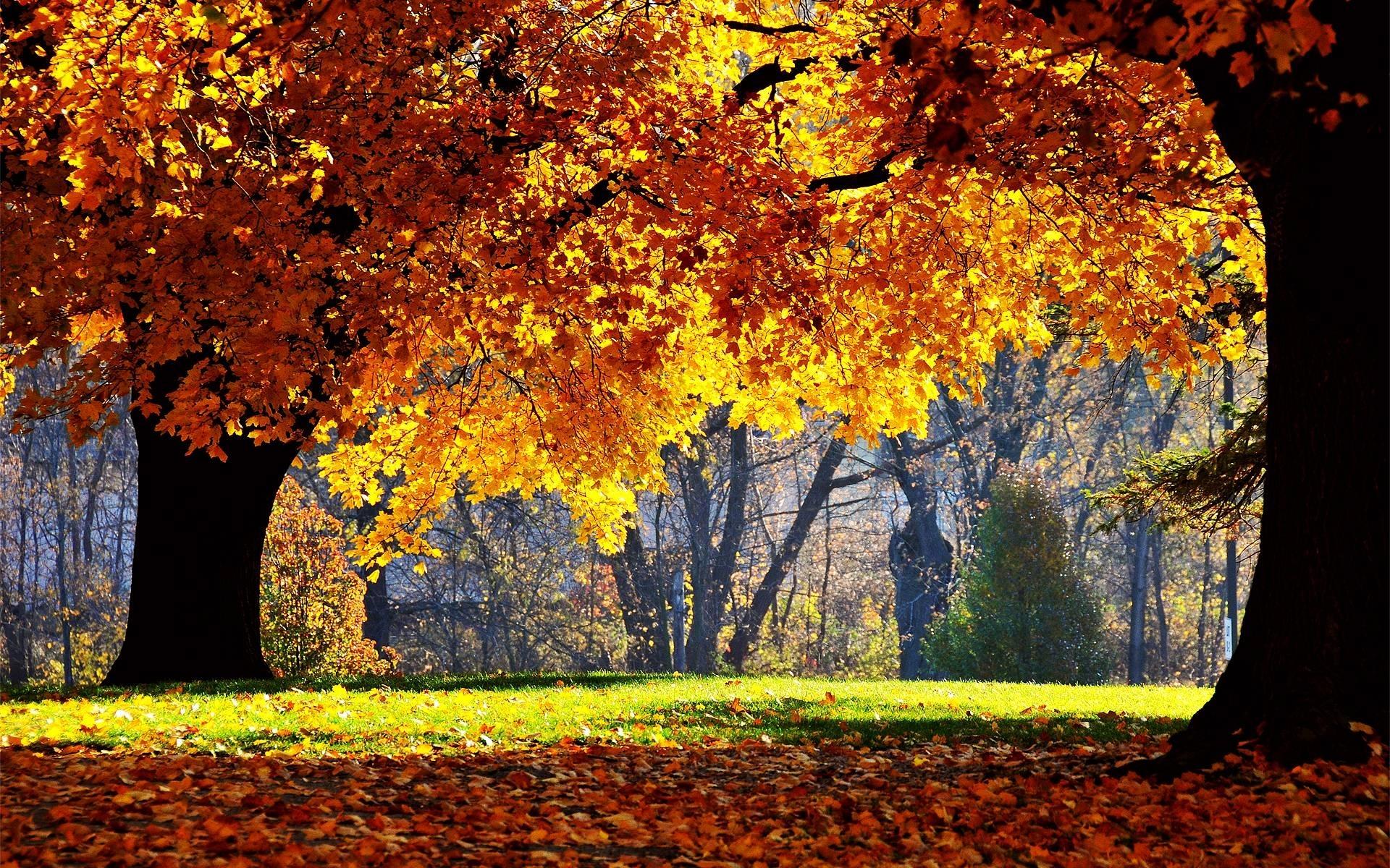 free autumn desktop wallpaper backgrounds - wallpaper cave