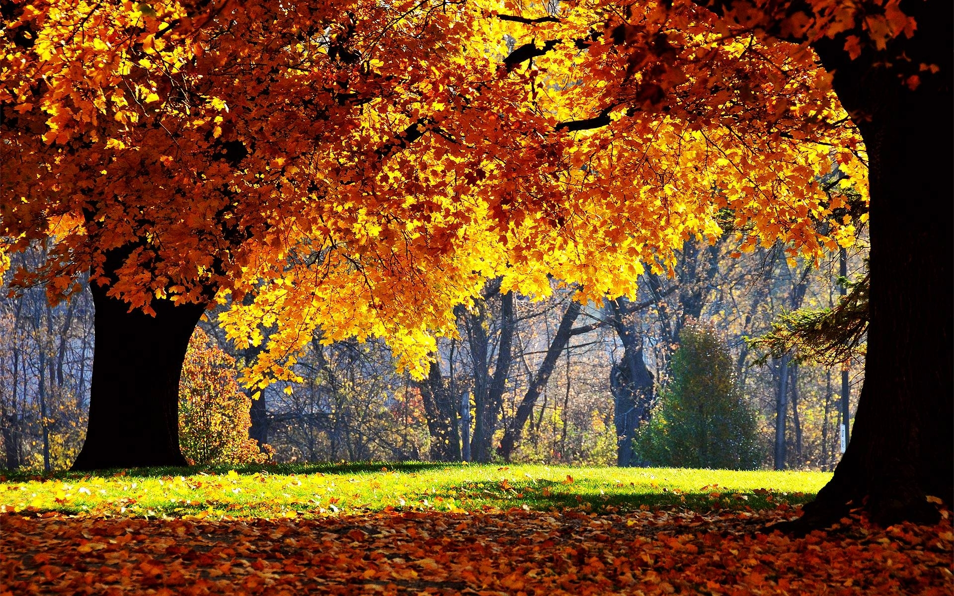 free autumn desktop wallpaper backgrounds - wallpaper cave