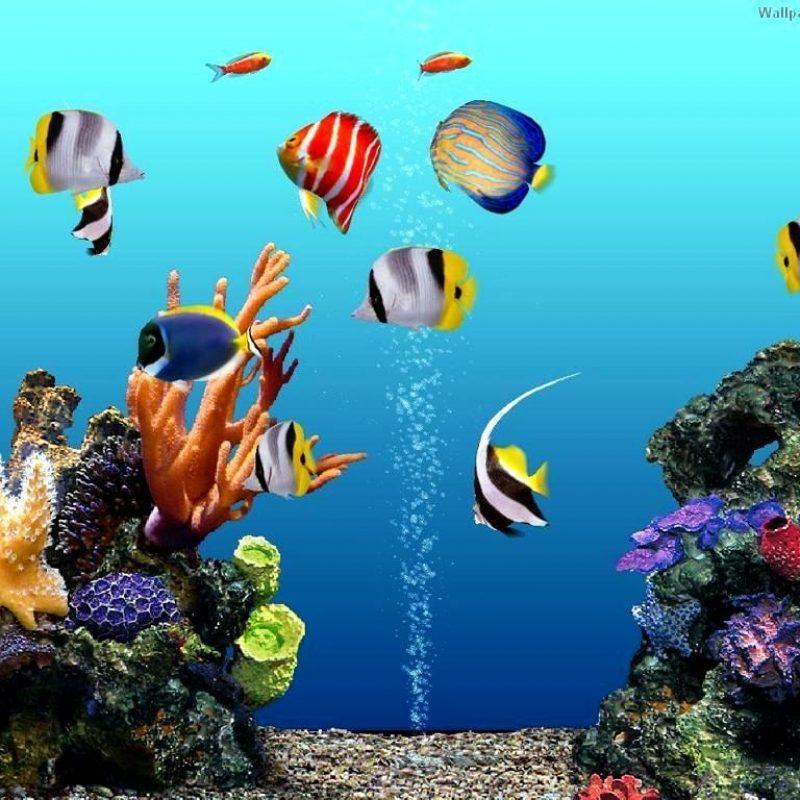 10 Latest Fish Tank Background Wallpaper FULL HD 1920×1080 For PC Background 2020 free download free background pictures for fish tanks background editing picsart 800x800