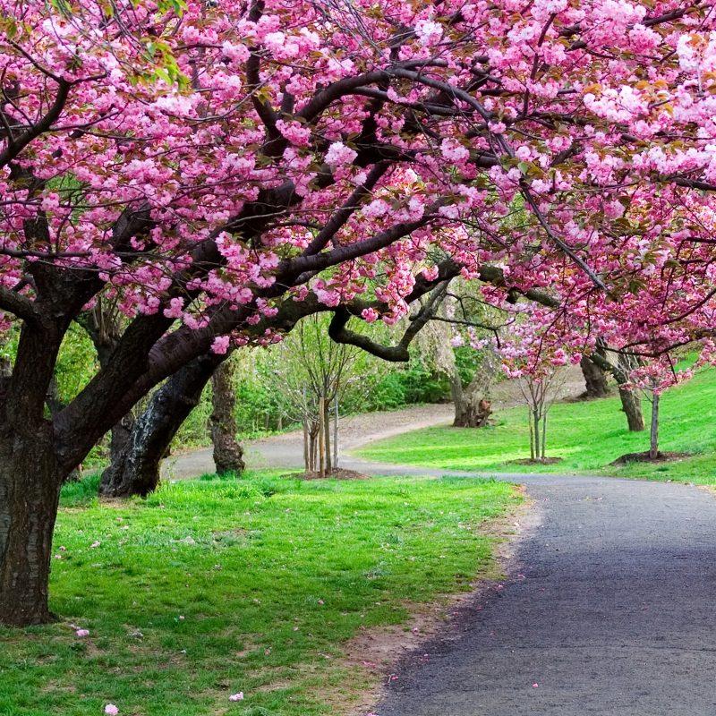10 New Beautiful Nature Wallpaper Spring FULL HD 1080p For PC Desktop 2021 free download free beautiful nature wallpapers mobile long wallpapers 800x800