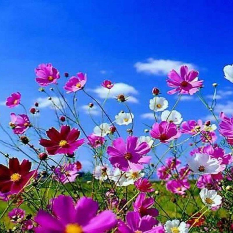 10 New Spring Flowers Background Desktop FULL HD 1920×1080 For PC Desktop 2018 free download free best wallpaper images flowers background lovely spring flowers 800x800