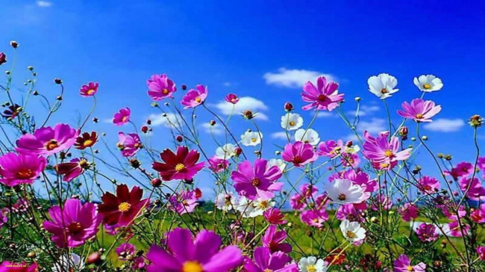 free best wallpaper images flowers background lovely spring flowers