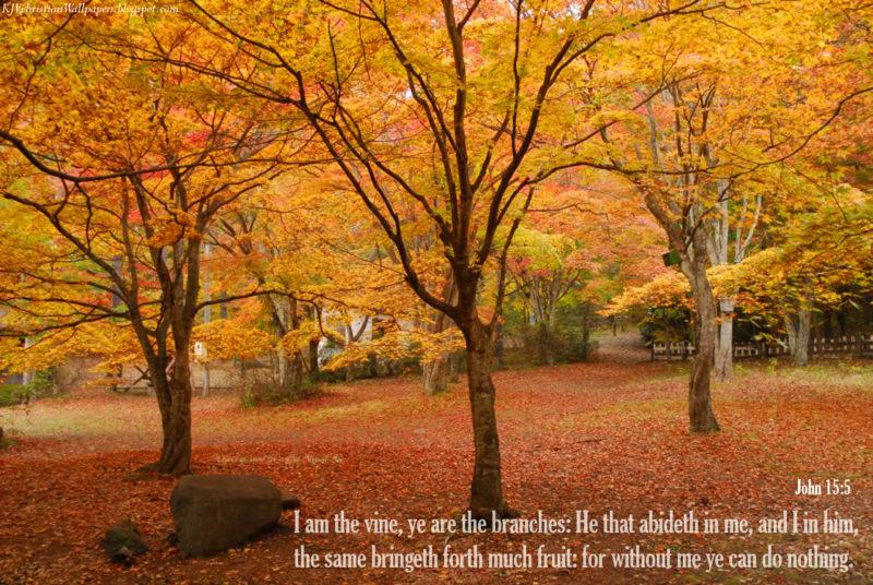 10 New Fall Scripture Wallpaper FULL HD 1080p For PC Desktop 2021 free download free christian autumn wallpaper wallpapersafari 800x536