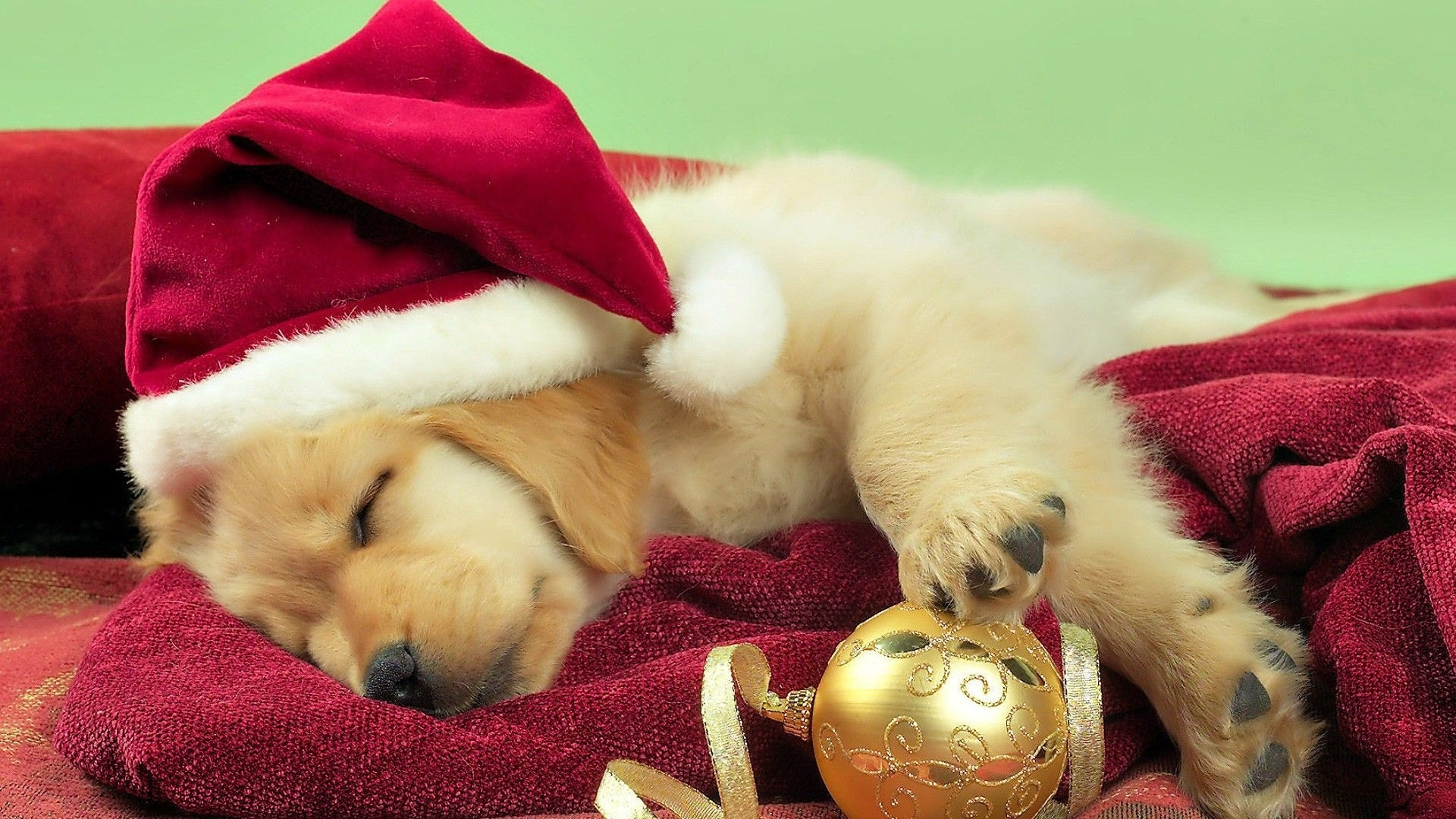 free christmas puppy backgrounds « long wallpapers