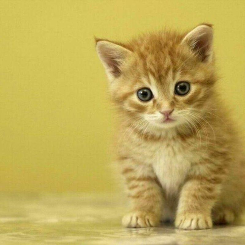 10 Most Popular Cute Wallpapers Of Kittens FULL HD 1920×1080 For PC Desktop 2018 free download free cute kitten wallpapers wallpaper cave 2 800x800