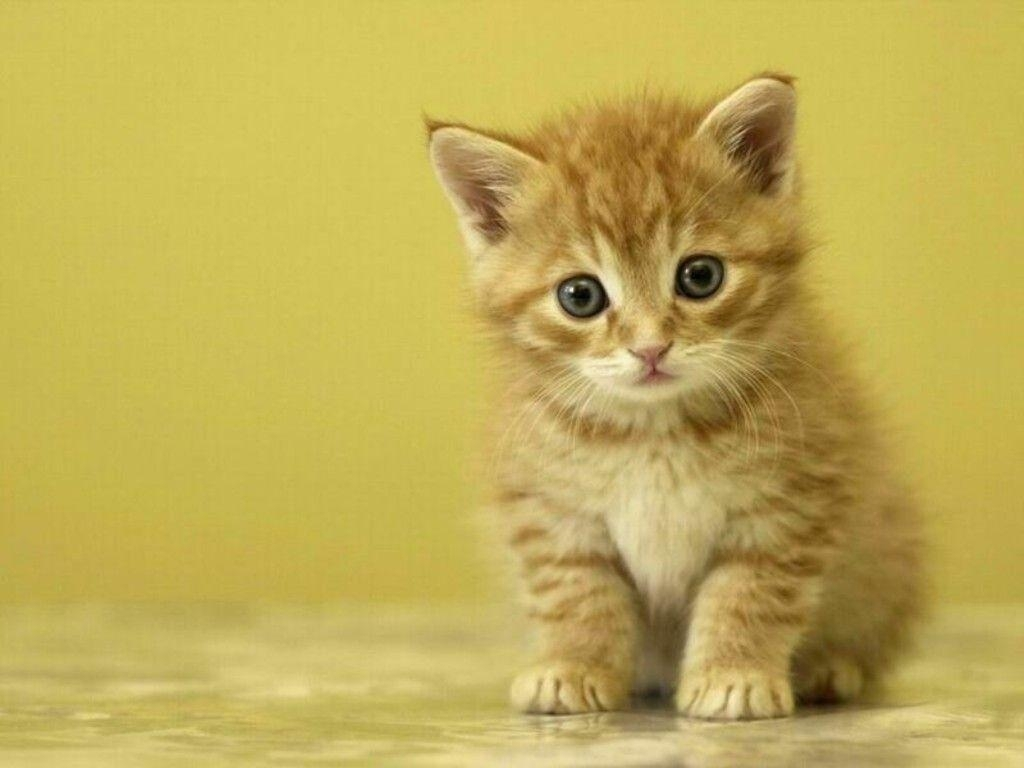 free cute kitten wallpapers - wallpaper cave