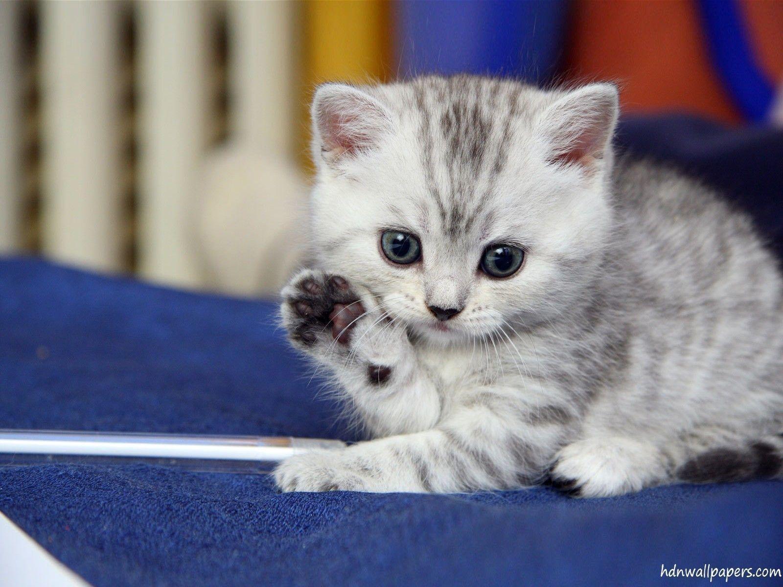 free cute kitten wallpapers - wallpaper cave