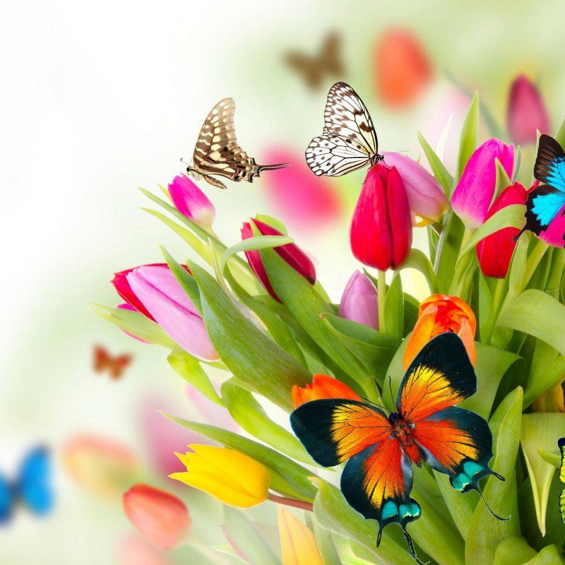 10 New Desktop Backgrounds Spring Flowers FULL HD 1080p For PC Background 2020 free download free desktop background flowers pictures hd wallpaper backgrounds 800x800