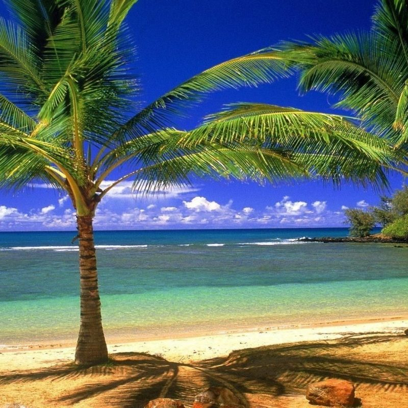10 Top Beach And Palm Tree Wallpaper FULL HD 1920×1080 For PC Background 2018 free download free desktop beach palm tree wallpapers ololoshenka pinterest 800x800