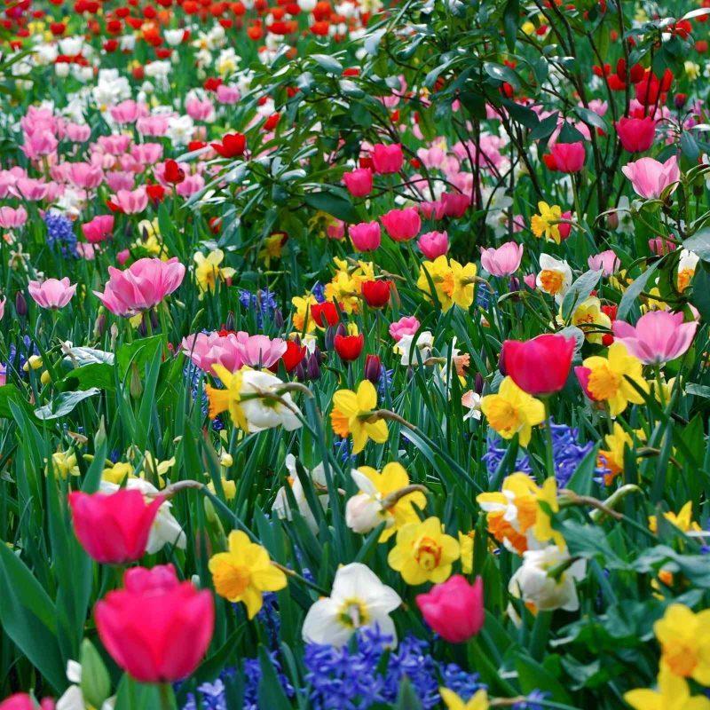 10 Top Free Springtime Desktop Wallpaper FULL HD 1920×1080 For PC Background 2020 free download free desktop wallpaper spring flowers 800x800