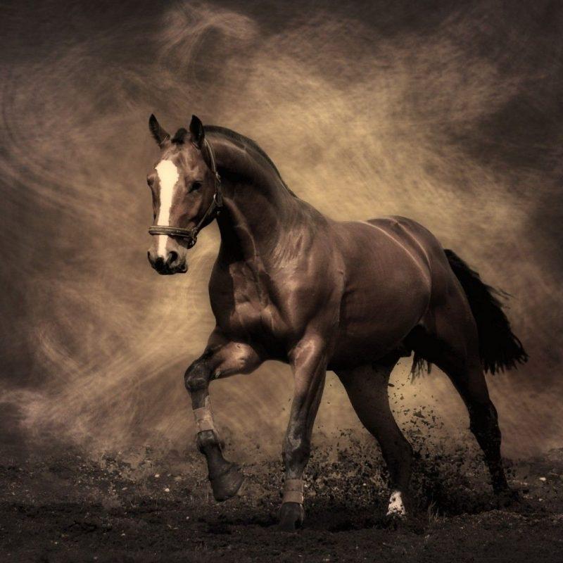 10 Latest Horse Backgrounds For Computer FULL HD 1920×1080 For PC Desktop 2021 free download free desktop wallpapers horses wallpaper hd wallpapers pinterest 800x800