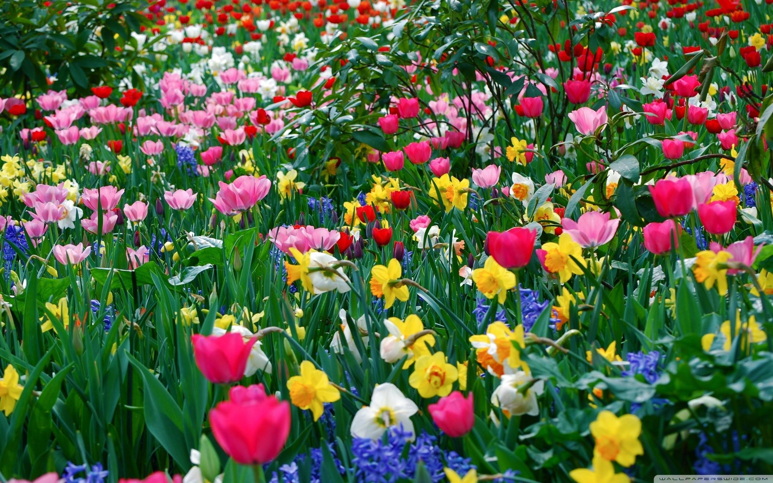 free desktop wallpapers spring flowers - wallpaper cave