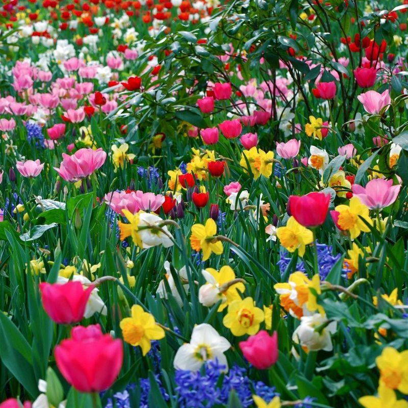 10 New Spring Pictures For Desktop FULL HD 1920×1080 For PC Desktop 2020 free download free desktop wallpapers spring flowers wallpaper cave 5 800x800