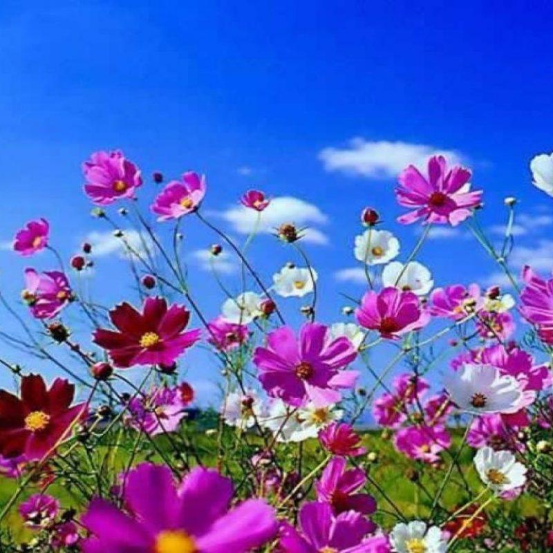 10 Most Popular Springtime Pictures For Desktop FULL HD 1920×1080 For PC Background 2021 free download free desktop wallpapers spring scenes wallpaper cave 2 800x800