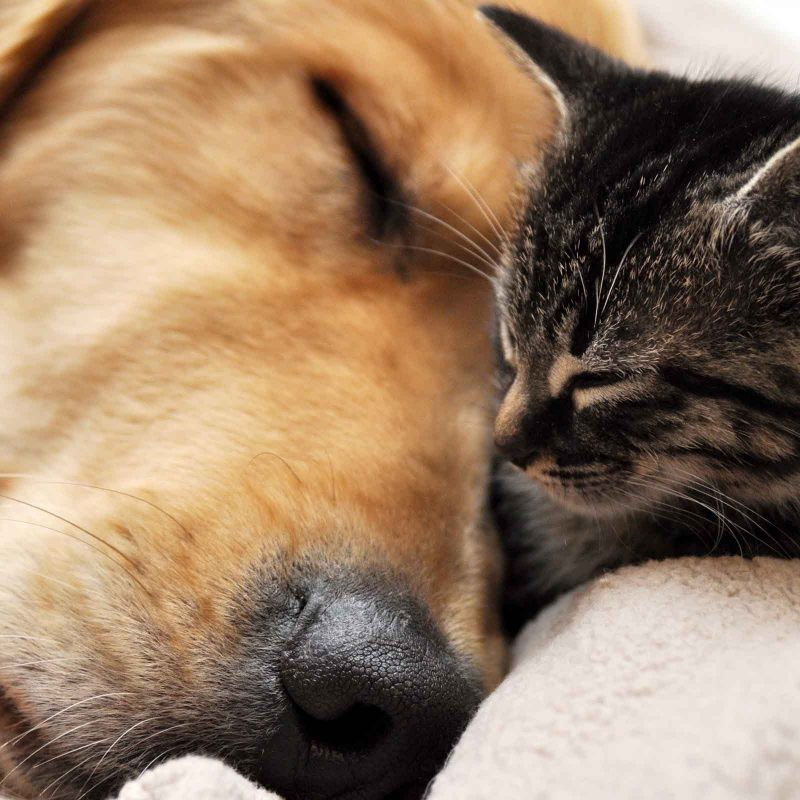 10 Most Popular Dog And Cat Wallpapers FULL HD 1080p For PC Background 2020 free download free dog and cat wallpaper high resolution long wallpapers 2 800x800