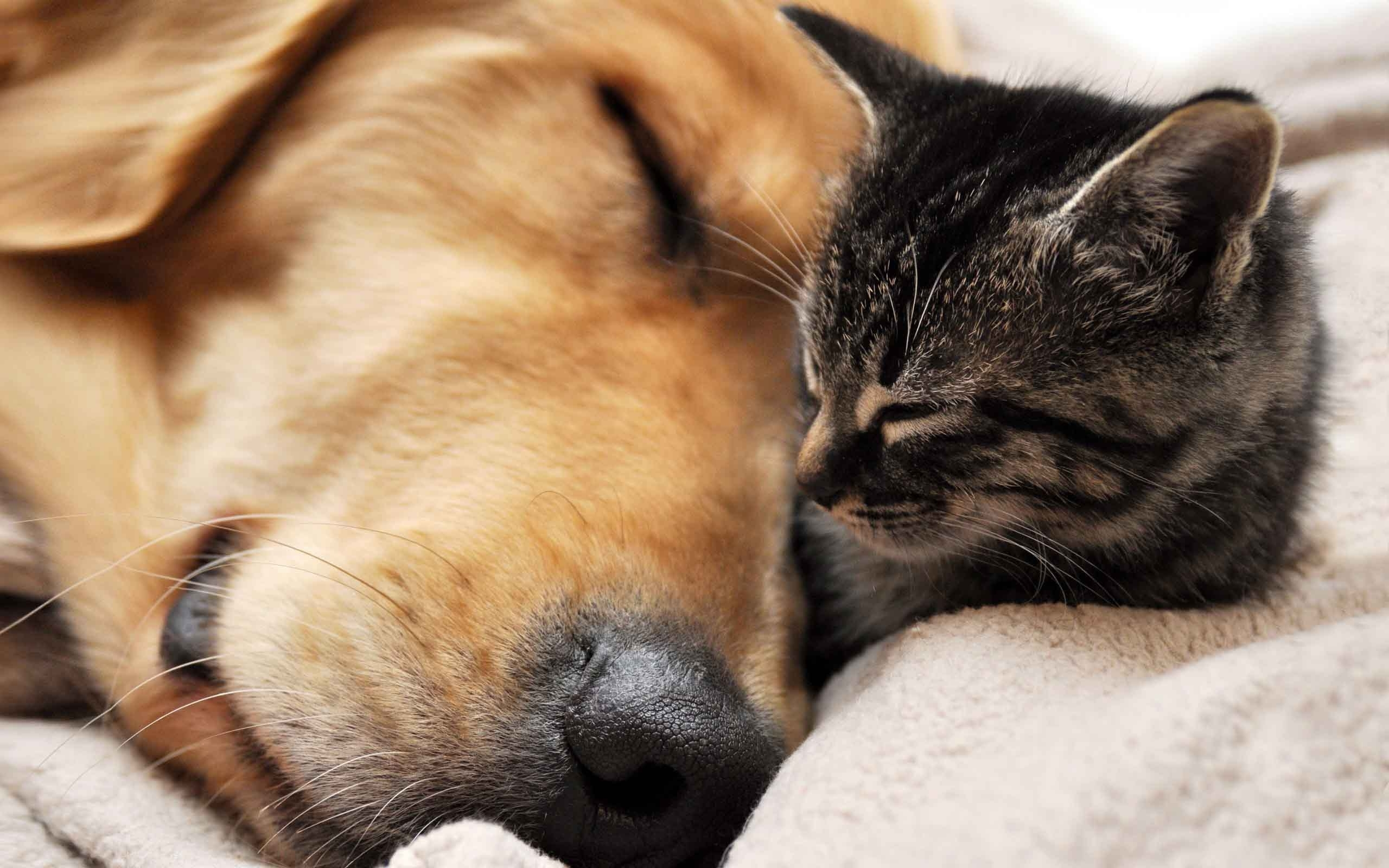 free dog and cat wallpaper high resolution « long wallpapers