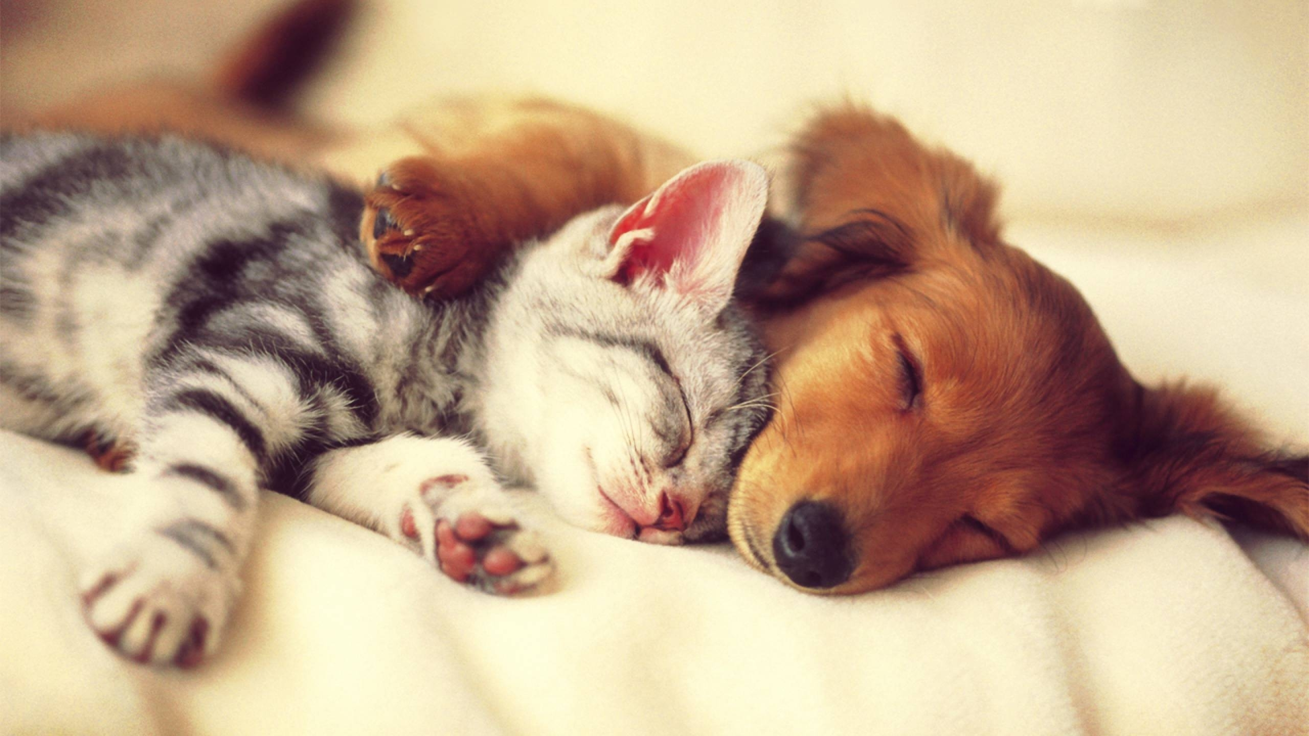 free dog and cat wallpapers photo « long wallpapers
