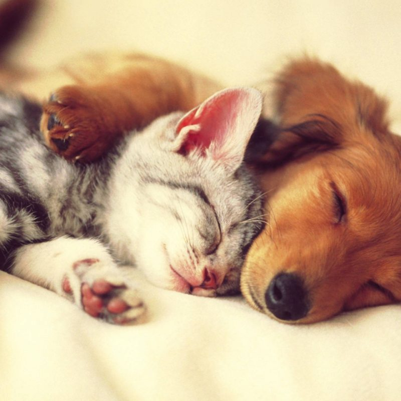 10 Most Popular Dog And Cat Wallpaper FULL HD 1080p For PC Background 2021 free download free dog and cat wallpapers photo long wallpapers 800x800
