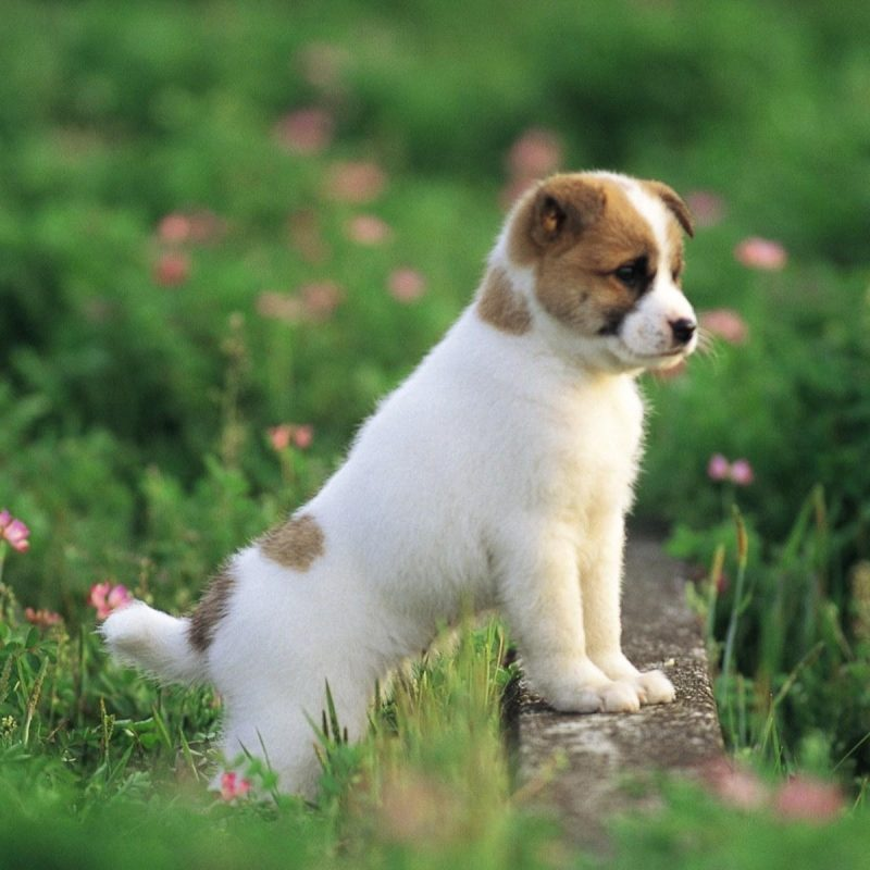 10 Top Dog Wallpaper For Android FULL HD 1080p For PC Background 2018 free download free dog wallpapers wallpaper cave 800x800