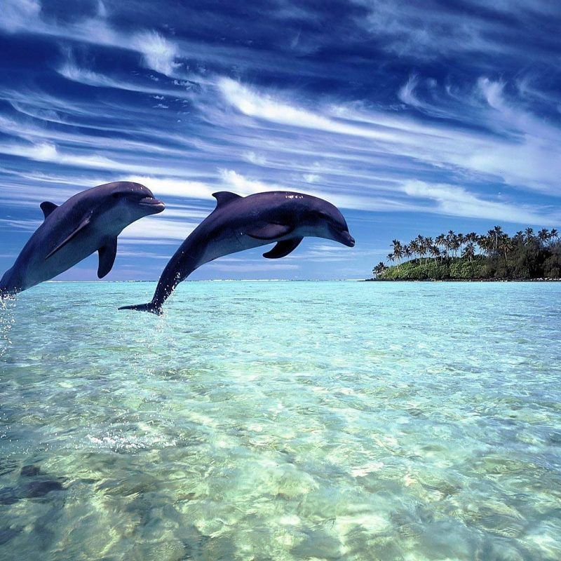 10 Best Dolphins Wallpaper Free Download FULL HD 1920×1080 For PC Background 2021 free download free dolphin wallpaper download animals town 800x800