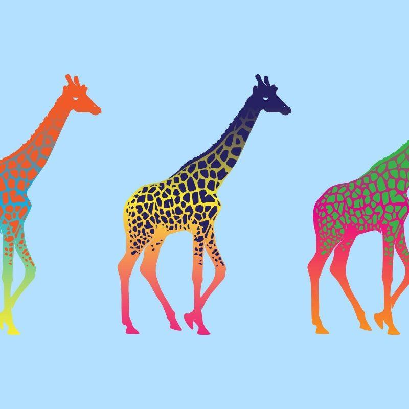 10 Latest Desktop Wallpaper Pop Art FULL HD 1080p For PC Desktop 2021 free download free download giraffe colorful pop art minimalism wallpaper 800x800