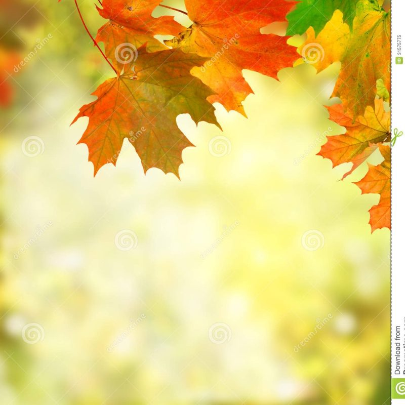 10 Latest Free Fall Background Images FULL HD 1080p For PC Desktop 2021 free download free fall background pictures http www specialswallpaper 1 800x800