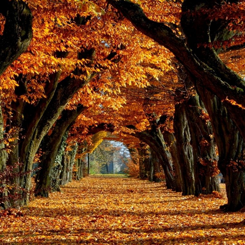 10 New Free Fall Wallpapers Download FULL HD 1920×1080 For PC Background 2021 free download free fall backgrounds autumn trees wallpaper best free wallpaper 1 800x800