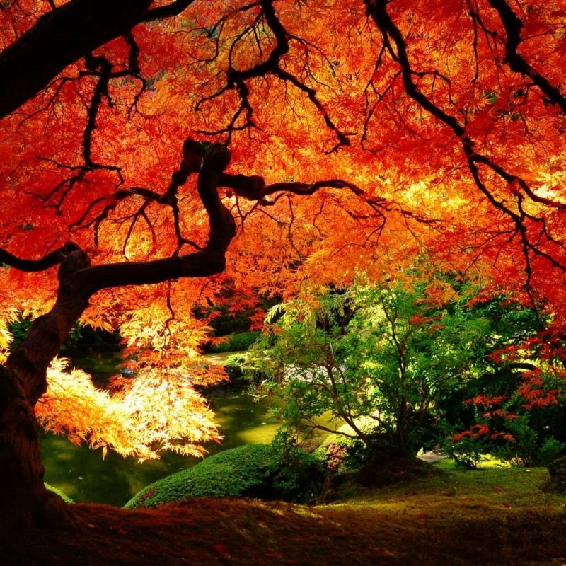 10 Best Fall Wallpapers For Desktop FULL HD 1080p For PC Background 2021 free download free fall backgrounds desktop wallpaper cave 16 800x800