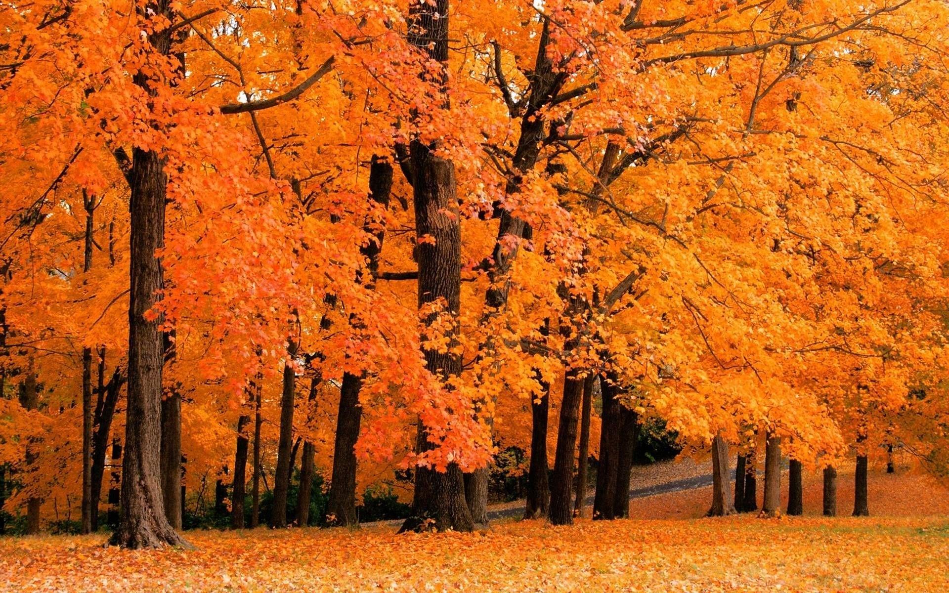 free fall desktop backgrounds - www. | color! ♥! | pinterest | fall