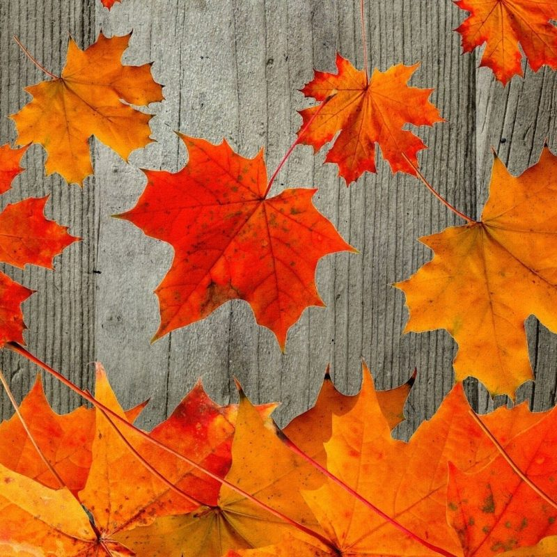 10 Best Free Autumn Wallpaper For Computer FULL HD 1920×1080 For PC Desktop 2020 free download free fall desktop wallpaper downloads 1280x1024 fall wallpapers 1 800x800