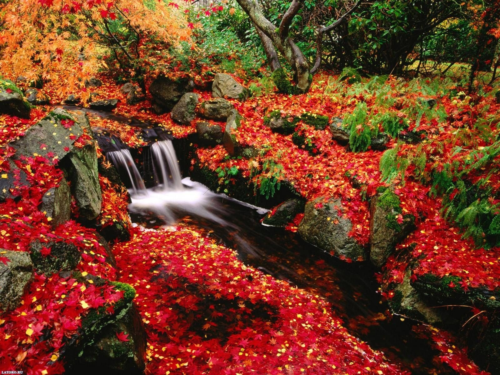 free fall desktop wallpaper downloads - www. | fall colors
