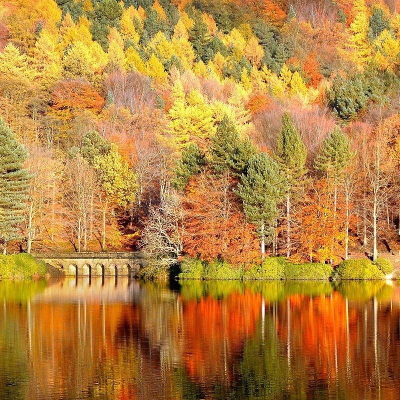 10 Best Autumn Desktop Backgrounds Free FULL HD 1080p For PC Background 2021 free download free fall desktop wallpapers backgrounds 1024x794px wallpaper 6 800x800