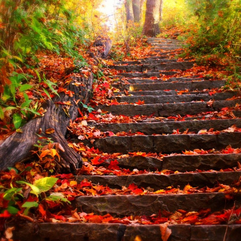 10 Best Fall Wallpapers For Desktop FULL HD 1080p For PC Background 2021 free download free fall desktop wallpapers group 77 8 800x800