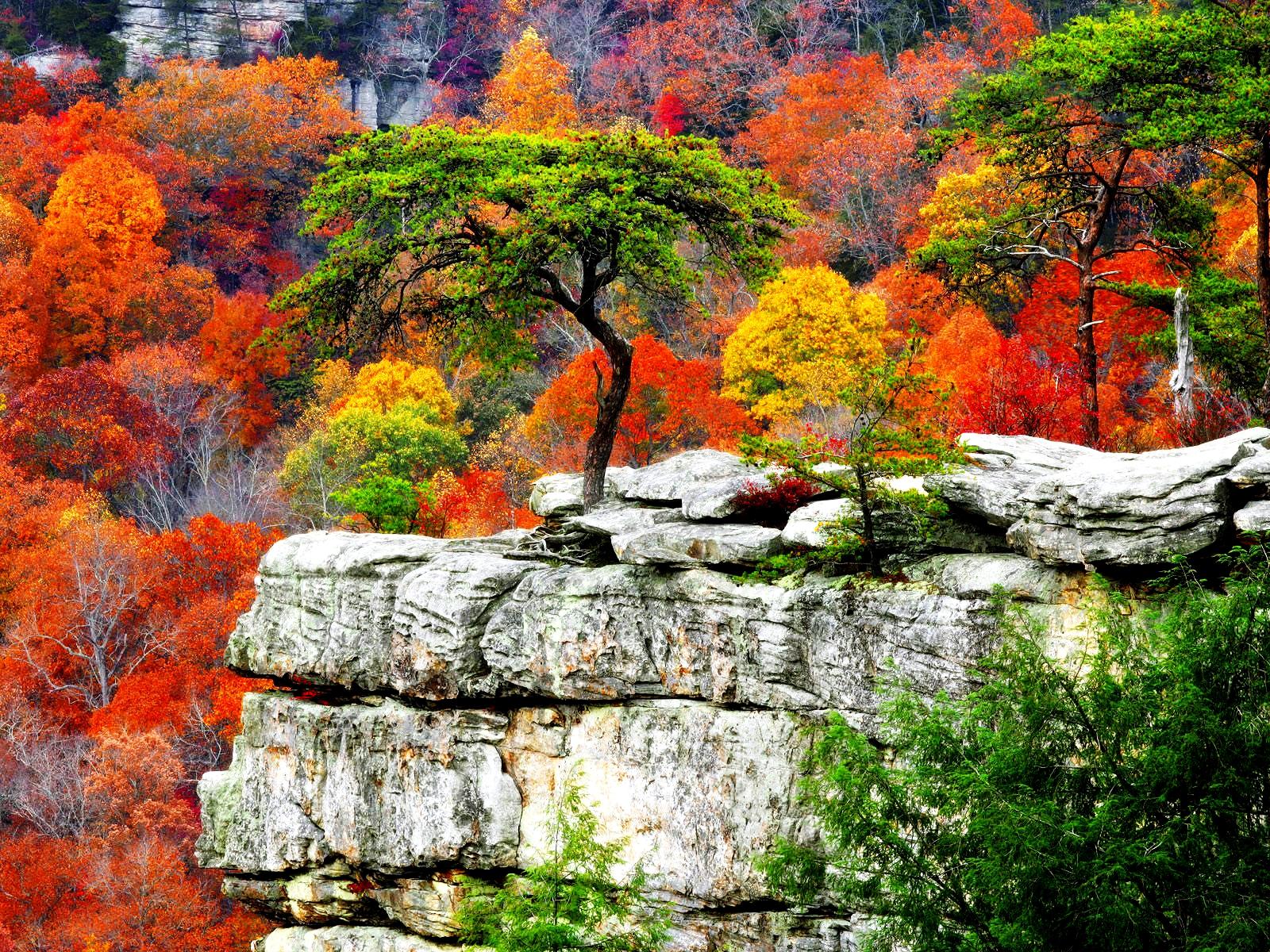 free fall scenery background download. - media file | pixelstalk