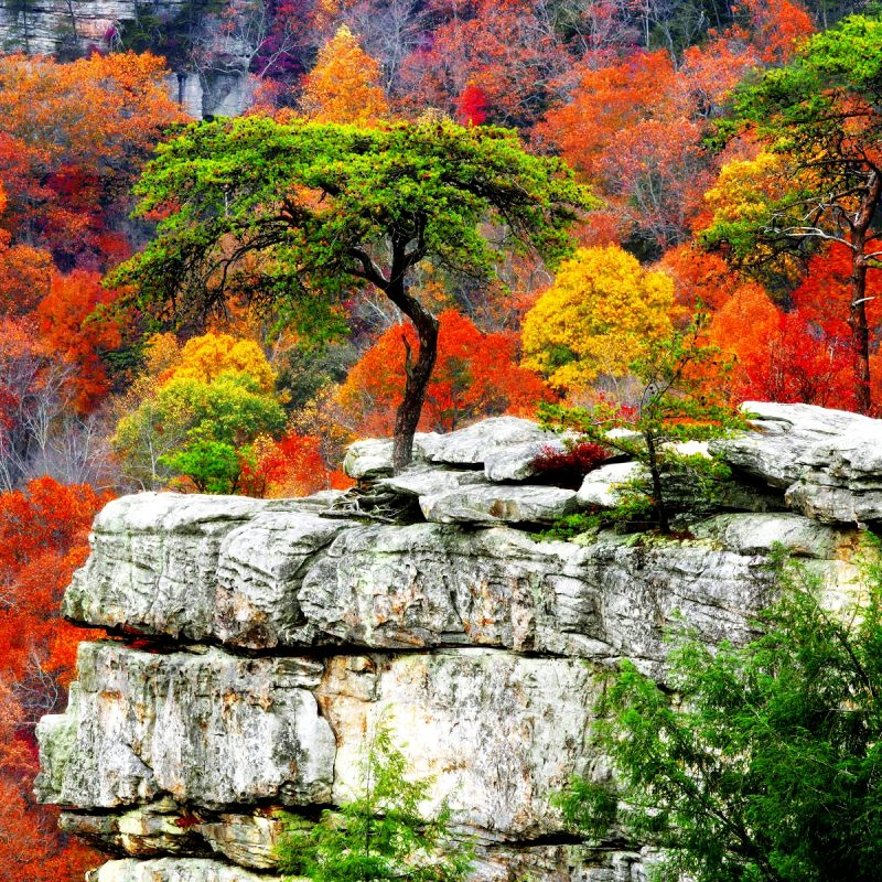 10 Top Free Screen Savers For Fall FULL HD 1080p For PC Desktop 2020 free download free fall scenery background download media file pixelstalk 800x800