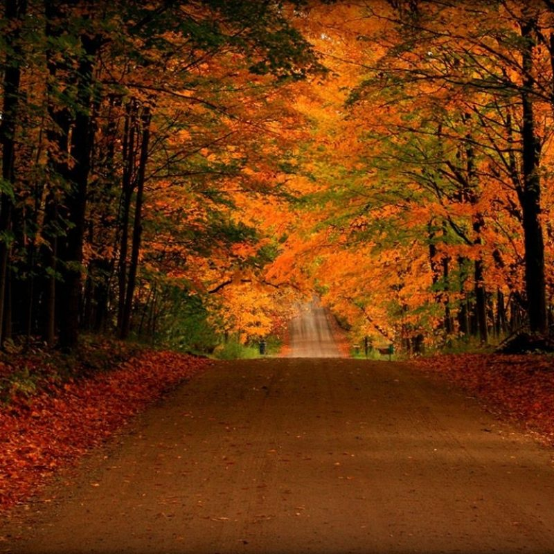 10 Top Free Screen Savers For Fall FULL HD 1080p For PC Desktop 2020 free download free fall screensavers and wallpaper free orange autumn road 800x800