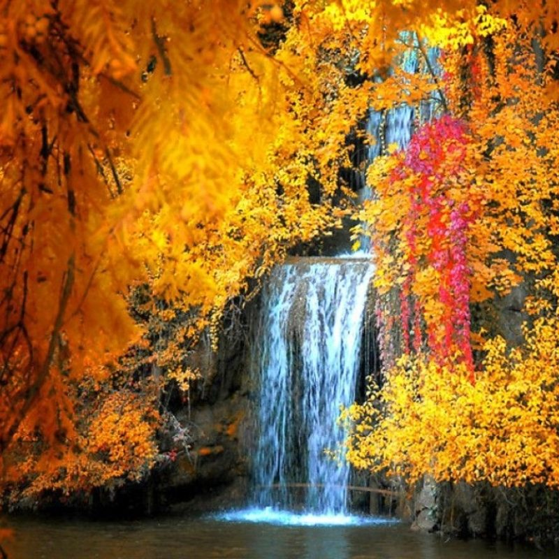 10 Best Free Fall Screen Savers FULL HD 1080p For PC Background 2018 free download free fall screensavers and wallpaper free waterfall in autumn 1 800x800