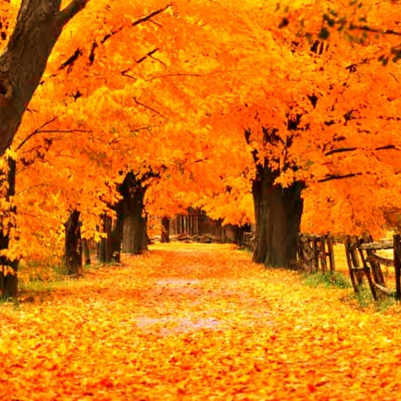 10 Top Free Screen Savers For Fall FULL HD 1080p For PC Desktop 2020 free download free fall screensavers and wallpaper the free gold autumn 1 800x800