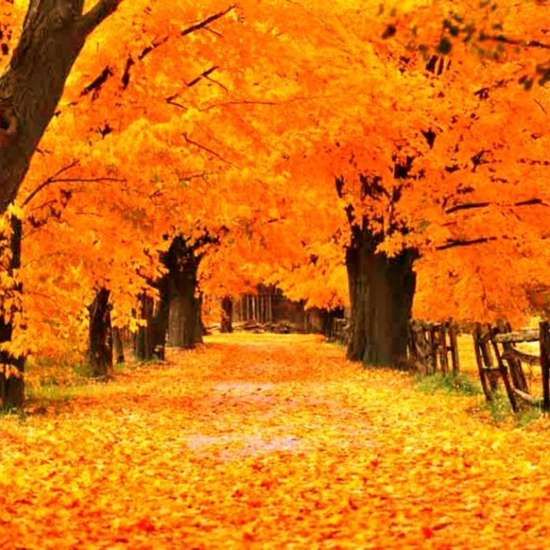 10 New Free Fall Wallpapers Download FULL HD 1920×1080 For PC Background 2021 free download free fall screensavers and wallpaper the free gold autumn 3 800x800