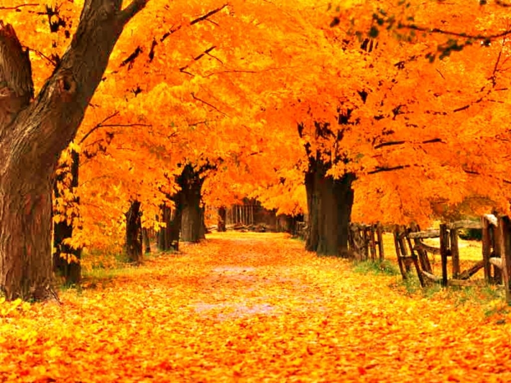 free fall screensavers and wallpaper | the free gold autumn