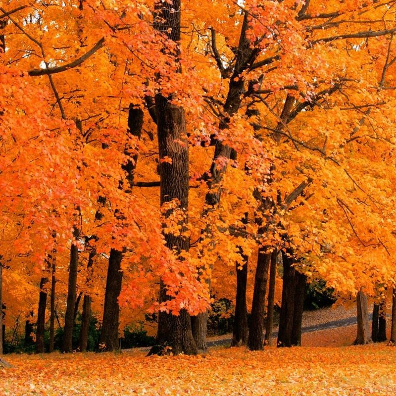 10 Most Popular Fall Screensavers For Desktop FULL HD 1920×1080 For PC Background 2020 free download free fall screensavers wallpapers group 47 800x800
