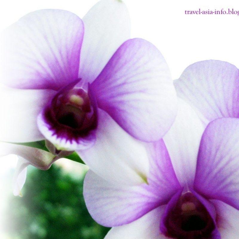 10 New Free Flower Desktop Wallpaper FULL HD 1080p For PC Background 2021 free download free flower desktop wallpaper flowers adi nature orchid wallpapers 800x800