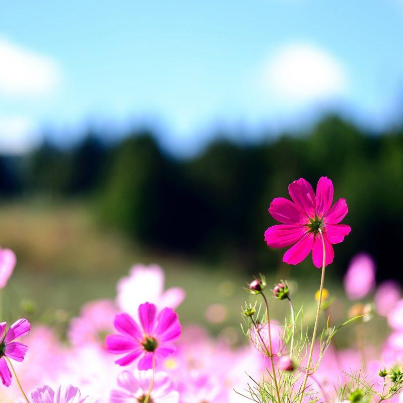 10 Top Desktop Flowers Wallpaper Backgrounds FULL HD 1080p